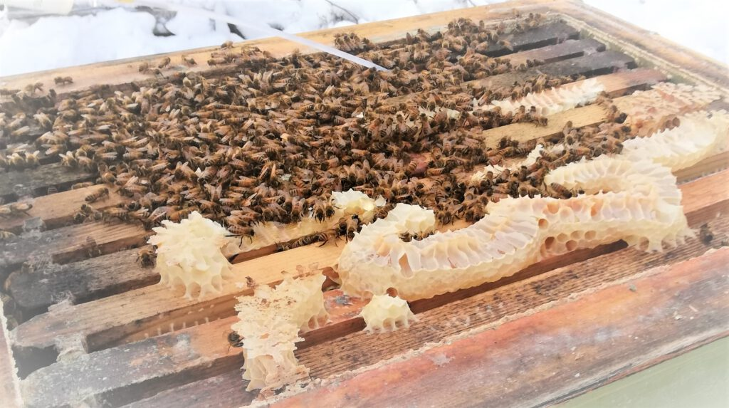 Mehiläispesä Luonnossa